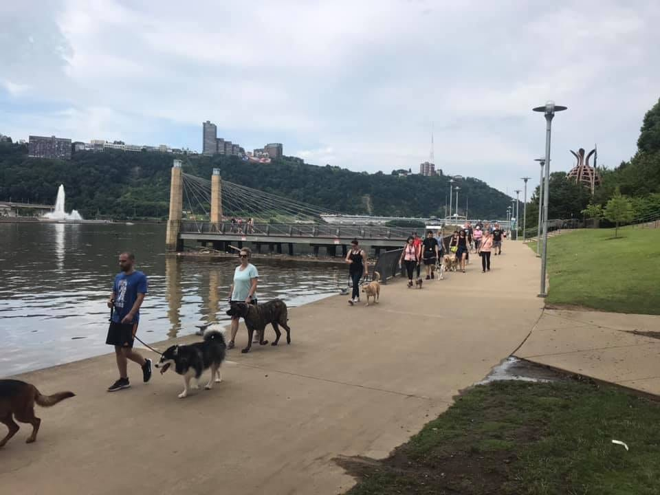 walking dogs by the river