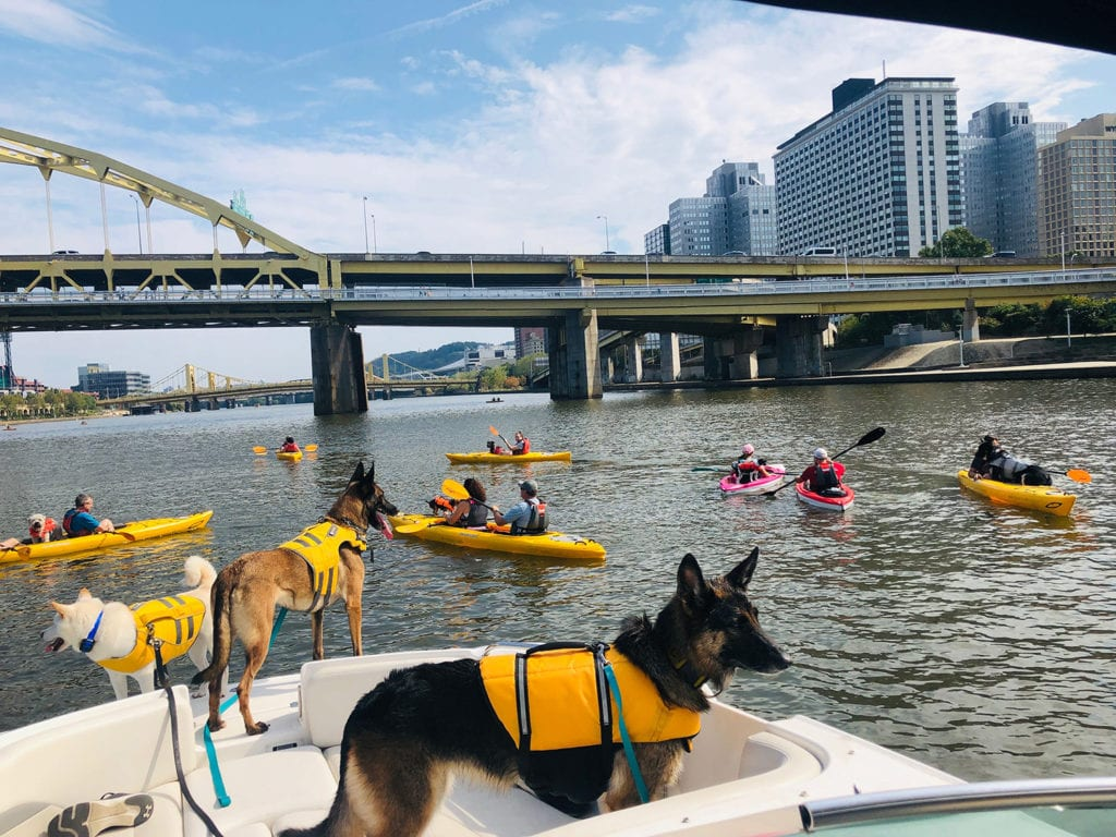 Kayaking with dogs on the river